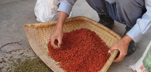 Pochodzenie jagód goji